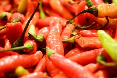 Ny chili Arkivbild
