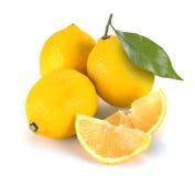 ny citron Arkivfoto