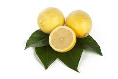 Ny citron på vit Fotografering för Bildbyråer