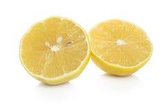 Ny citron på vit bakgrund Arkivfoto