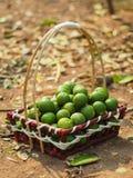 Ny citronlimefrukt i korg Royaltyfri Bild