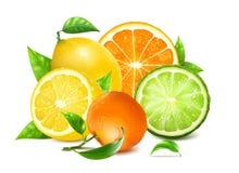 Ny citrus med sidor vektor illustrationer