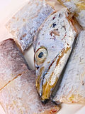 ny congerfisk arkivbilder