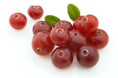 ny cranberry royaltyfri fotografi