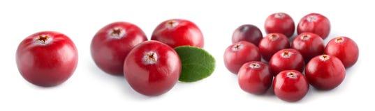Ny cranberry royaltyfria foton