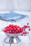 ny cranberry arkivbilder
