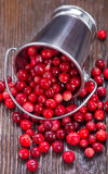 ny cranberry arkivbild