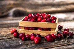 ny cranberry arkivfoto