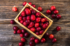 ny cranberry arkivfoton