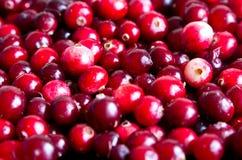 Ny cranberry för bakgrund arkivbilder