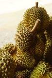 Ny Durian på Durianträd i fruktträdgården, Thailand Arkivbilder