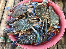 Ny färg fångar krabbor på marknaden i Thailand Royaltyfria Foton