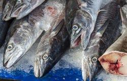 ny is för fisk Arkivfoton