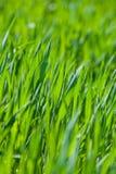 ny för gräs vertical thick fotografering för bildbyråer