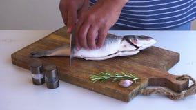 Ny förberedelse för havsfisk lager videofilmer