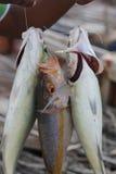 ny försäljning för fisk Arkivfoto