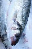 ny försäljning för fisk Royaltyfria Foton