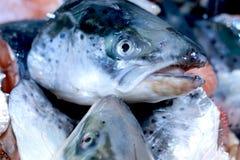 ny försäljning för fisk Arkivfoton