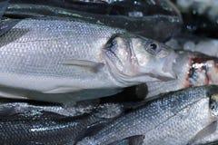 ny försäljning för fisk Royaltyfri Foto