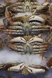 ny försäljning för krabba Royaltyfria Bilder