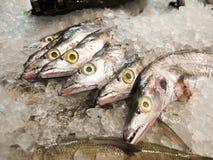 Ny försäljning för rå fisk i marknad Arkivbilder