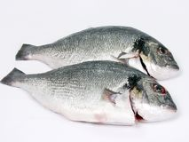 ny fisk Arkivbild