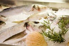 ny fisk Royaltyfria Foton