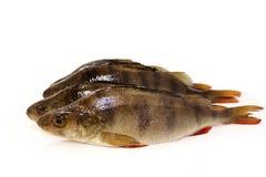 Ny fisk Royaltyfri Fotografi