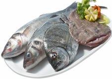 Ny fisk Arkivfoton