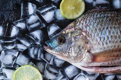 Ny fisk av tilapia på is med citrondeg royaltyfri bild