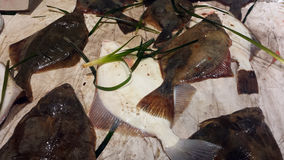 Ny fisk för Psettamaximumpiggvar på en marknad i Cagliari Italien Arkivbild
