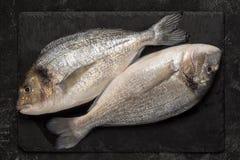 Ny fisk f?r dorado tv? p? svart granitstenbr?de royaltyfria foton