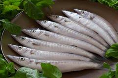 Ny fisk från marknaden Arkivfoto