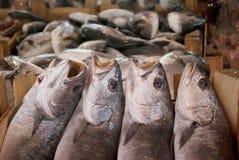 Ny fisk i en marknad royaltyfri foto
