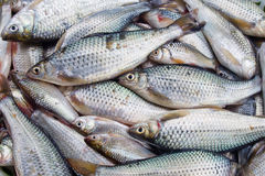 Ny fisk i marknad royaltyfria foton