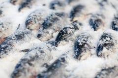 Ny fisk på is Arkivfoto