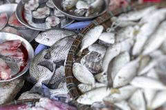 Ny fisk på den lokala traditionella marknaden i ton, Vietnam arkivfoto