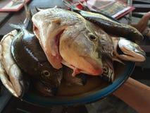 Ny fisk på den Pemuteran stranden, Bali, Indonesien Arkivfoton