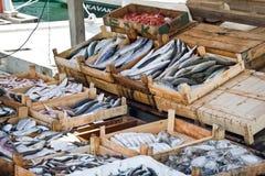 Ny fisk på försäljning på marken Royaltyfria Foton