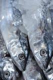 Ny fisk på is i marknaden Royaltyfri Foto