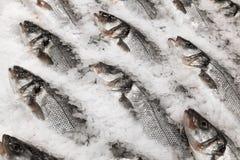 Ny fisk på is Royaltyfri Bild