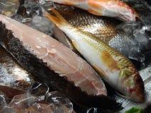 Ny fisk på restaurangskärm Arkivfoton