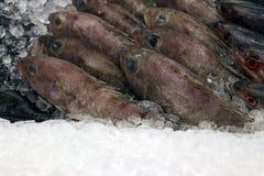 Ny fisk på stallen för att kocken ska laga mat Arkivbild