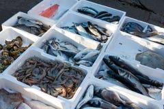 Ny fisk på stranden i Budva, Montenegro Arkivbilder