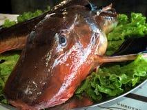 Ny fisk som fångas i Blacket Sea Fotografering för Bildbyråer