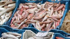 Ny fisk som ut läggas på en effekt för marknadsKen brännskador lager videofilmer