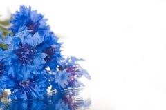 ny fjäder för första blommor Fotografering för Bildbyråer