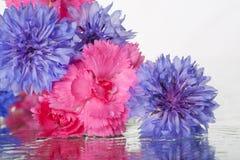 ny fjäderwhite för första blommor Royaltyfria Foton