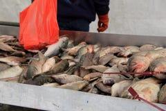 Ny fångad fisk på skärm på Quincy Market, 2014 Arkivbild