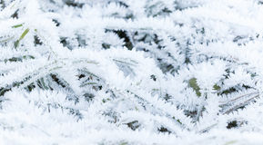 Ny frost täcker grönt gräs Royaltyfri Fotografi